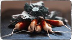 radish 09208 (m.r. nelson) Tags: radishes artphotography stilllife mrnelson marknelson markinaz color coloristpotography
