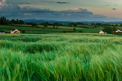 DSC_9192 (Daniel Matt .) Tags: sunset sunsetcolours fileds greennature photography aroundtheworld travel longexposure sunsets irishlandscape amazingviews