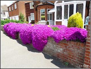 Garden Wall Felixstowe.