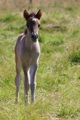 So Cute (ivlys) Tags: messel pferd horse fohlen foal wiese meadow tier animal natur nature ivlys