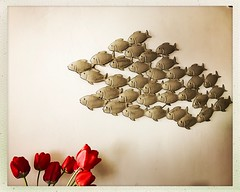 Large Group Of Objects No People Flower Fish (AlienLB) Tags: largegroupofobjects nopeople flower fish