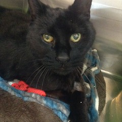 Walter - 7 year old neutered male