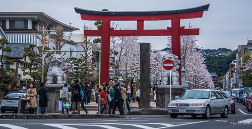 2017  - Kamakura - Tsurugaoka Hachimangu Shrine - 2 of 9
