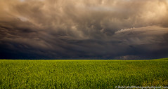-When Nature Calls (westrock-bob) Tags: threatening wind storm drama nature crop ab cuthill agriculture canon thunder uneasy clouds plains 6d summer prairies copyright prairie intense dark alberta takecover outdoors canada eos kneehillcounty evil field