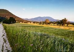 Brest pod Učkom u kasno proljeće (MountMan Photo (occasionally offline)) Tags: brestpodučkom istra croatia landscape trave