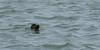 Vlieland 2017-3799 (Reitse Eskens) Tags: vlieland vliehorsexpress vliehors nature seal waddensea animals sealife tamron nikon