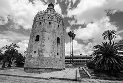 Torre de Oro (maugustocabral) Tags: spain sevilha tower street