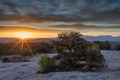 Good Morning Moab! (Kirk Lougheed) Tags: coloradoplateau lasal lasalmountains usa unitedstates utah dawn juniper landscape outdoor sunrise tree