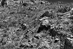 A Rugged Hillside of Rocks, Boulders and Saguaro Cactus (Black & White) (thor_mark ) Tags: arborescenttreelikecactus blackwhite blueskies cactus cactusacrossdesertlandscape cactusflowers cactusflowersontop capturenx2edited carnegieagigantea colorefexpro coronadonationalforest day2 desert desertlandscape desertplantlife engelmanspricklypearcactus garwoodtrail groveofcactus groveofsaguarocactus hillsides huachucaarea intermountainwest landscape lookingsw mountains mountainsindistance mountainsoffindistance nature nikond800e opuntiaengelmannii outside portfolio project365 rideintosabinocanyon sabinocanyon sabinocanyonrecreationarea saguaro saguarocactus santacatalinamountains silverefexpro2 sonorandesert southeastarizonaranges southwestbasinsandranges sunny arizona unitedstates