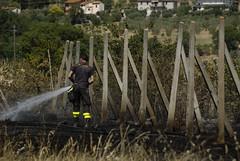 Niente vino (luc.feliziani) Tags: pompiere fuoco lancia prtezione vigna passoni en751 caldo erba aldo sfalcio