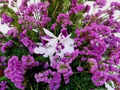 Explosion (Paula Luckhurst) Tags: orchid statice limonium whiteorchid purplestatice whiteflowers purpleflowers greenleaves flowers plants leaves gardens outdoor