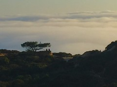 sitting near the clouds... (mar-itz) Tags: torreypines california reserve park sky cloud couple silhouette nature sunset cloudy tree nwn pair nube cielo silueta atardecer