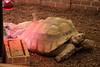 水族館49 (ののリサを信じろ) Tags: 水族館 白熊 カエル 蛙 シロクマ なまはげ 獅子舞 神社 桜 鯉のぼり アシカ