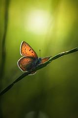 Walking the rope of faith (Tjidididi) Tags: faith rope butterfly sweden