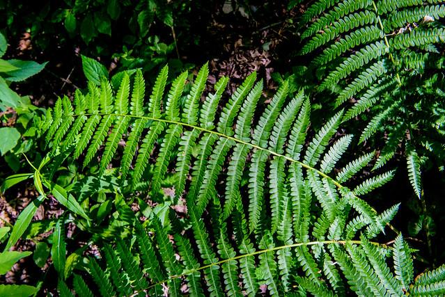 Woodland Bog Nature Preserve - June 21, 2017