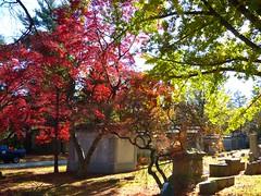 P1060675 (amiterangi1) Tags: woodlawncemetery autumn cemetery woodlawn