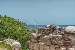 DSC01037 (someNERV) Tags: aguadilla puertorico wilderness wildo beach tropical borinquen caribbean ocean coastline hot sand water turquoise sony alpha a6300 apsc adapted minolta rokkorx 50mm f14 zhongyi lensturboii travel vacation