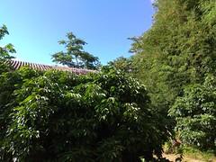 xioami-redmi-note-4x-review-70