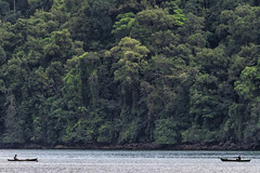 Pescadores de atún. (Fredy Gómez Suescún) Tags: bahiasolano chocobiogeográfico chocó chocóbiogeográfico colombia naturaleza nature nuquí pacifico utria instagram rainforest selva ngc