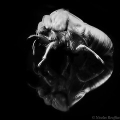 Monster (Nicolas Rouffiac) Tags: insecte insectes insect macro macros proxy nature animal animaux animals monstre monster dark fear peur cigale mue cicada moult bw nb