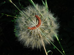 My Seeds Landed on Your Seeds (Pictoscribe) Tags: pictoscribe flowers seeds