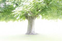 the incredible lightness of treeing (Hal Halli....happy everything!!) Tags: tree park light wallart decor legacy magicunicornverybest