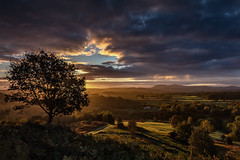 Bringsty re-done (MarkWaidson) Tags: bringsty common lone tree sunrise light sky clouds malverns hills