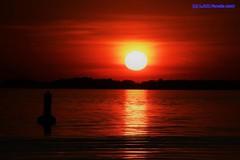 crepúsculo de 9 de julho de 2017 (Luiz Filipe Varella) Tags: lago guaíba rio água water eau paisagens natureza aves silhuetas contraluz backlight sunset crepúsculos ocasos sol nuvens skyline