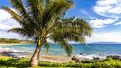 Wailea (RaulCano82) Tags: wailea beach water ocean summer 2017 raulcano palm palmtree tree greenery landscape lava rock island tropical vacation travel paradise sun sunny canon 80d aloha mahalo hawaii hi usa