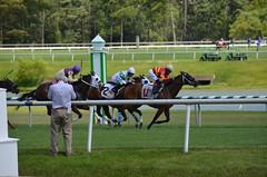 "2016-07-10 (42) r4 Yomar Ortiz on #11 Delightful Erin for the win (JLeeFleenor) Tags: photos photography maryland md marylandhorseracing laurelpark horseracing jockey جُوكِي ""赛马骑师"" jinete ""競馬騎手"" dżokej jocheu คนขี่ม้าแข่ง jóquei žokej kilparatsastaja rennreiter fantino ""경마 기수"" жокей jokey người horses thoroughbreds equine equestrian cheval cavalo cavallo cavall caballo pferd paard perd hevonen hest hestur cal kon konj beygir capall ceffyl cuddy yarraman faras alogo soos kuda uma pfeerd koin حصان кон 马 häst άλογο סוס घोड़ा 馬 koń лошадь photographer jimmccue"