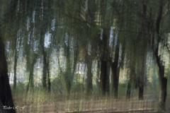 Paseo por el bosque (pedroramfra91) Tags: naturaleza nature bosque forest árbol tree cielo sky