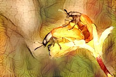 Insect Art Work (> steemit.com/@coolwitch) Tags: insects animals nature art steemit coolwitch kunst painting artwork gallery ladybug marienkäfer liebe love