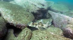 Port Jackson at Bare Island (Corey Hamilton) Tags: bareisland scubadiving