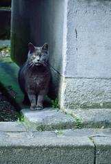Cimetière Montmartre 11 03 2017_10 (Partibul) Tags: paris partibul cimetière montmartre chat
