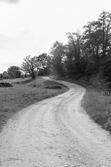 Mon chemin (thierry.T) Tags: eté paysage nb bw chemin champs courbes