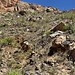 A Rugged Hillside of Rocks, Boulders and Saguaro Cactus