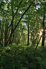 Zauber des Waldes (Evan_1980) Tags: wald springkraut nsghauptmannsberg feldberg zansen carwitz