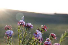 HALO (Maluka.X) Tags: nature halo bloom ray light shadow harmony summer animal insect buttlefly plant grass landscape artistic color colorful season vacation travel life