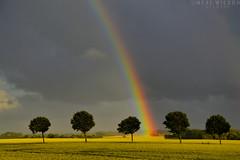 danish summer (Neal J.Wilson) Tags: weather denmark danishlandscapes rainbow countryside landscapes trees stormclouds storm rain sun jylland jutland nature nordic scandinavia sky clouds