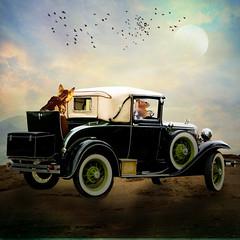 Driving Miss Myra (jaci XIII) Tags: gato esquilo carro animal paisagem cat squirrel car landscape