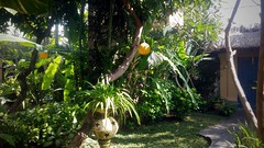 Private Seminyak villa garden, Bali (scinta1) Tags: indonesia bali seminyak villa garden pool green peaceful tranquil restful tropical trees palms leaves flowers bohemian private plants shade shadows mirror entrance