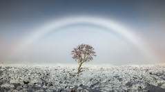 Calmer, Fogbow (Scott Robertson (Roksoff)) Tags: fogbow calmer winter snow tree glencoeskicentre lonetree beinnachrulaiste lochanachlaise lochanstainge blackmount lochba rannochmoor glencoe scottishhighlands scotland meallabhuiridh criese buachailleetivemor buachailleetivebeag stobdearg mountains outdoors landscape nikond810 1635mmf4 leefilters buachaillleetivemor thethreesisters autumn colour devilsstaircase serene