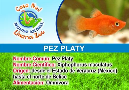 pez platy