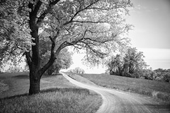 Big Bend (Jen MacNeill) Tags: country rural pa pennsylvania farm leadinglines road dirt tree spring chestercounty bigbend frolicweymouth