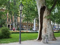 Zrinjevac tree hiding place