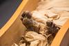Mummia (bcayres) Tags: hotel chiesa pietà michelangelo mummy roma rome italia italy itália viaurbana st sopra minerva via urbana maria maggiore altare della patria monumento vitorio emanuele ii di loreto ristorante lazio trastevere vatican vaticano vaticani statue estátua gaivota gabbiano seagull dei foro romano imperiali mt palatino palatine mount constantine imperator constantino arco arc coliseum colosseo colosseum scuola atene rafael afresco múmia mummia