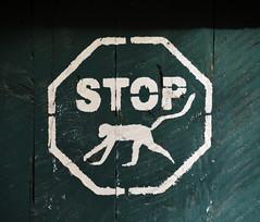 Nairobi (Kenya) - No Monkeys! (Danielzolli) Tags: kenia kenya kenie kenija afrika afryka afric nairobi nairobbery monkey ape affe seinge sign znak schild stop