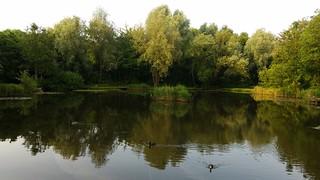 Tibshelf Ponds 2 (Week 51/52)_In Explore
