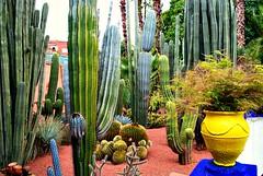 MAROCO 01-2015 142 (Elisabeth Gaj) Tags: maroco012015 elisabethgaj afryka travel garden flowers plant natur nature marrakech