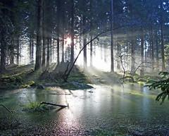 Winter Light in Atholl Woods (eric robb niven) Tags: ericrobbniven scotland dunkeld winter walking perthshire trees mist